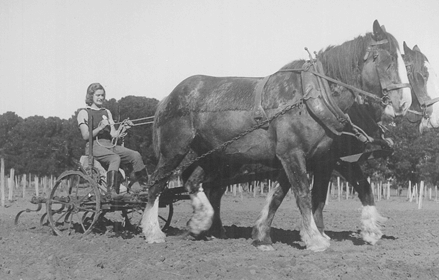 Historical image of student on horse drawn tractor