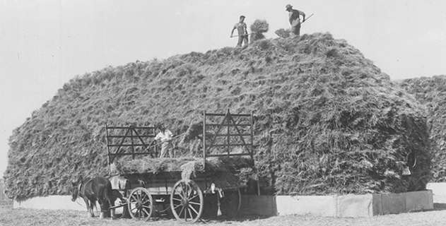 Historical image of students on giant haystack